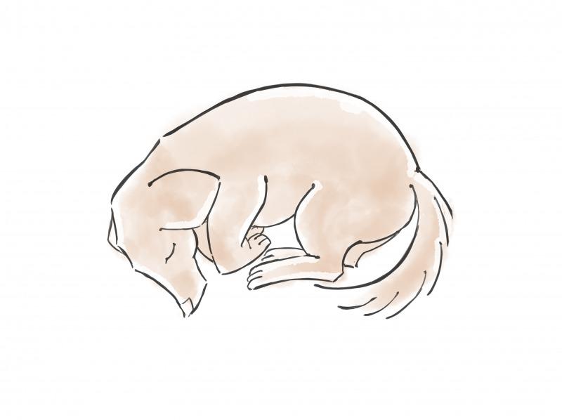 ペットの遺体安置の仕方1