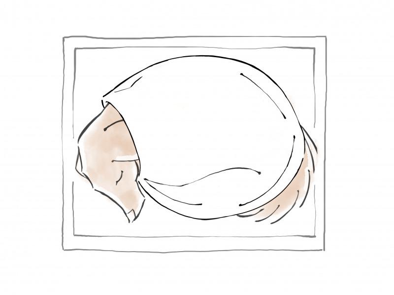 ペットの遺体安置の仕方2