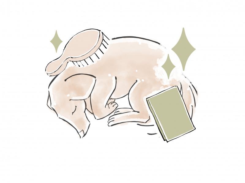 ペットの遺体安置の仕方4